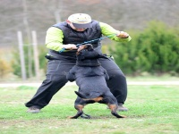 Kutyakiképző OKJ