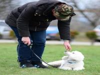 Kutyakiképző OKJ képzés