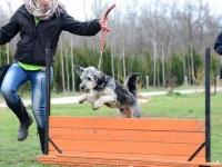 Kutyakiképző képzés