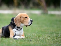 Habilitációs kutya kiképzője tanfolyam