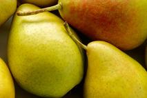 Gyümölcspálinka-gyártó