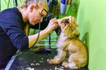 Kutyakozmetikus képzés