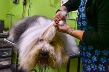 Kutyakozmetikus OKJ tanfolyam