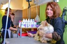 Kutyakozmetikus OKJ képzés