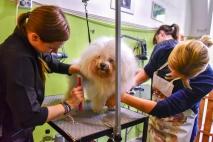 Kutyakozmetikus OKJ