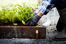Növényházi munkás